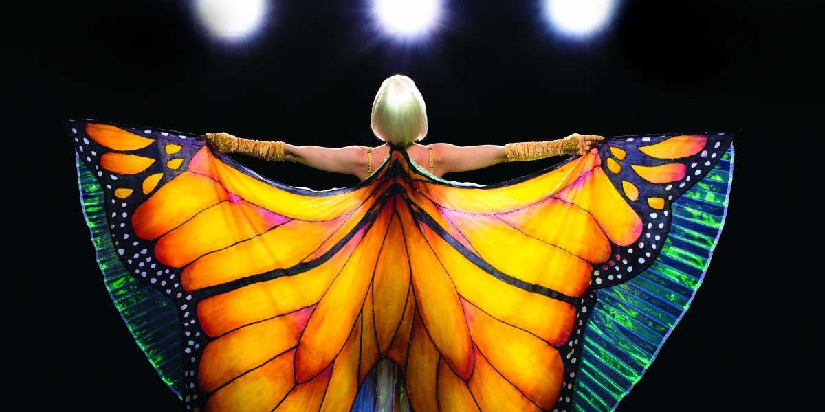 редкая бабочка 2018