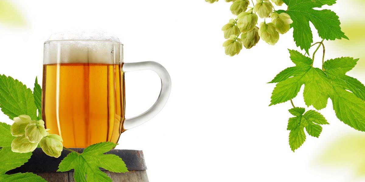Как правильно выбрать хорошее пиво