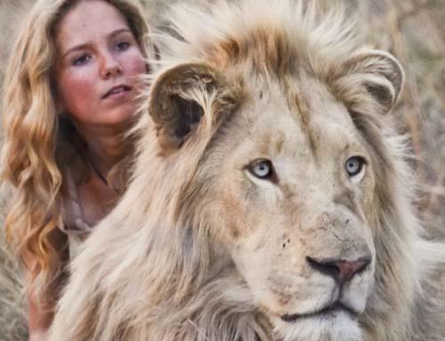 Фильм «Девочка Миа и белый лев» (2018)